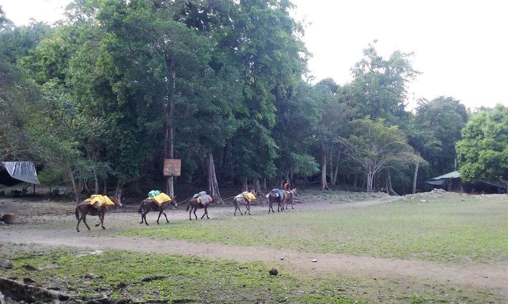 El Mirador - Guatemala - Trek pour monter sur la plus haute pyramide maya - Charlotte-Cha3