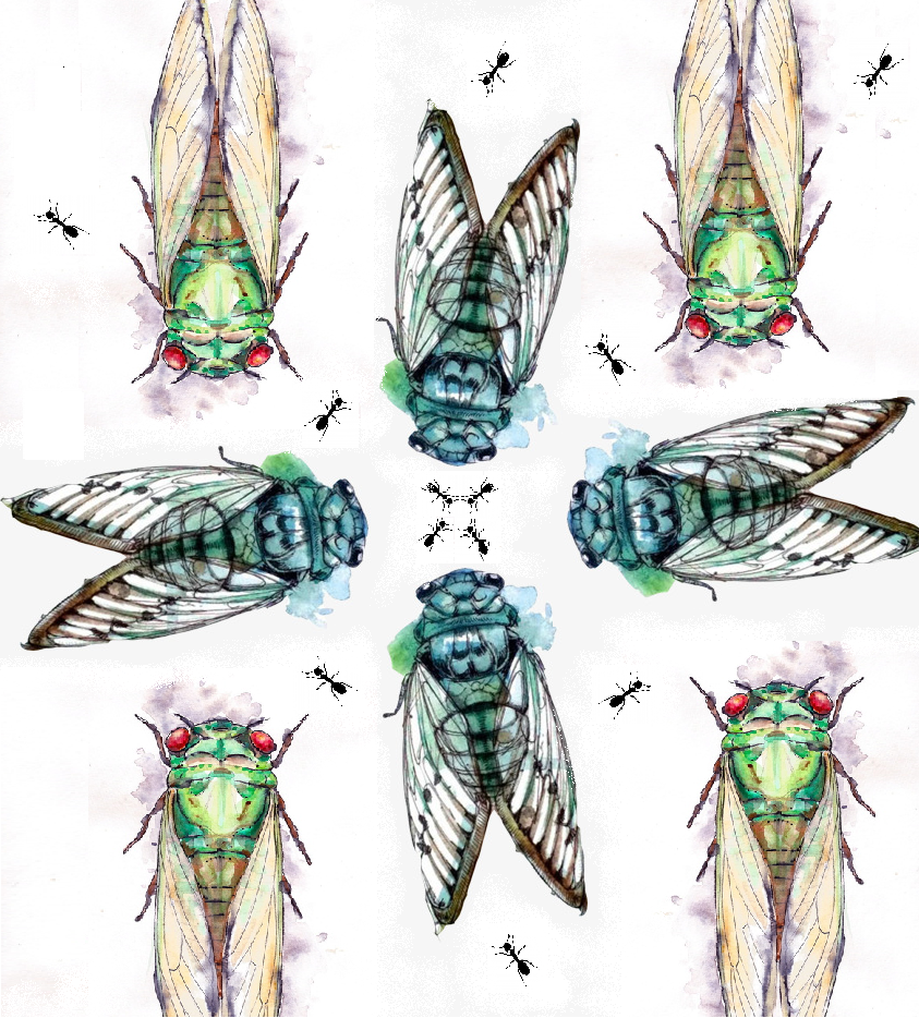 cigale fourmi portraits de voyages