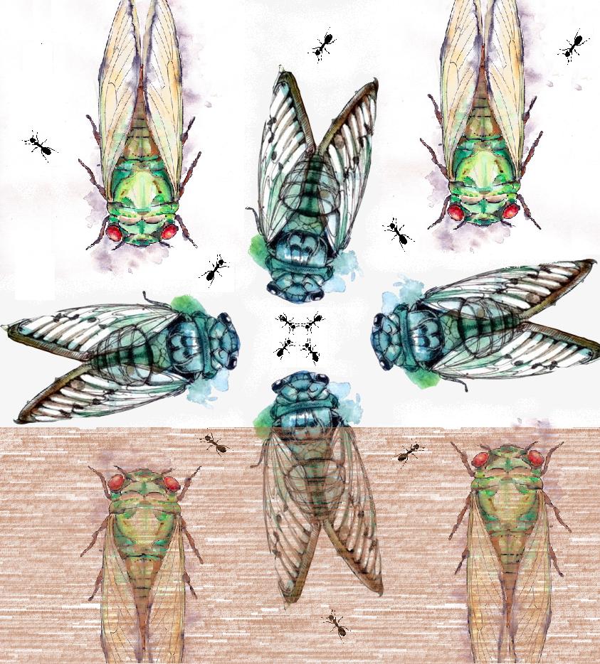 la cigale et la fourmi portraits de voyages